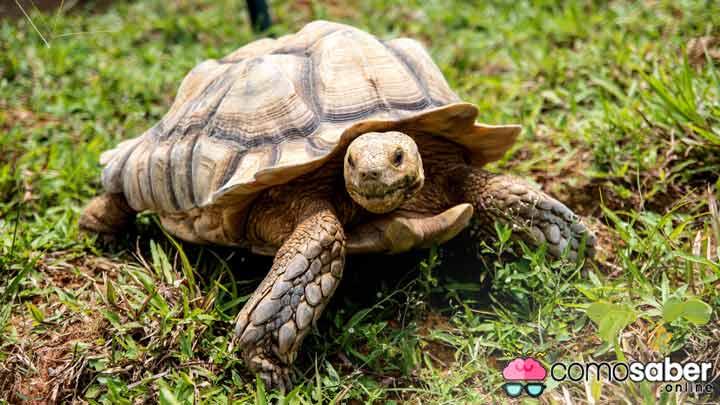 como saber cuantos años vive una tortuga de tierra
