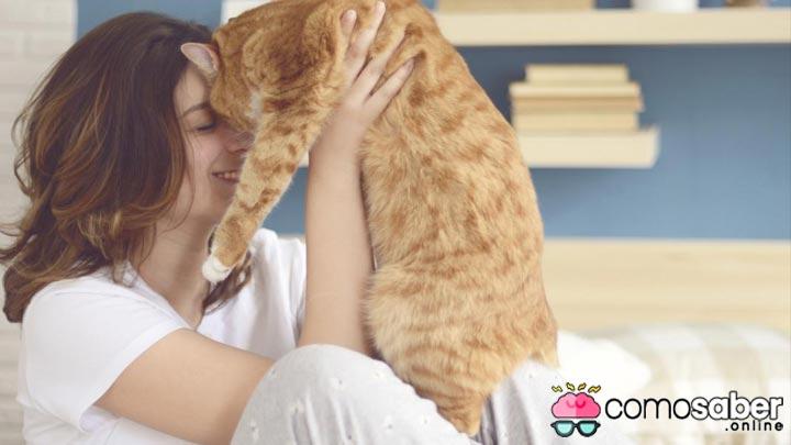 como saber cuando mi gato realmente me ama