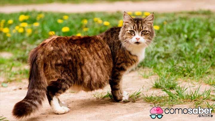 como saber porque una gata tienen parasitos
