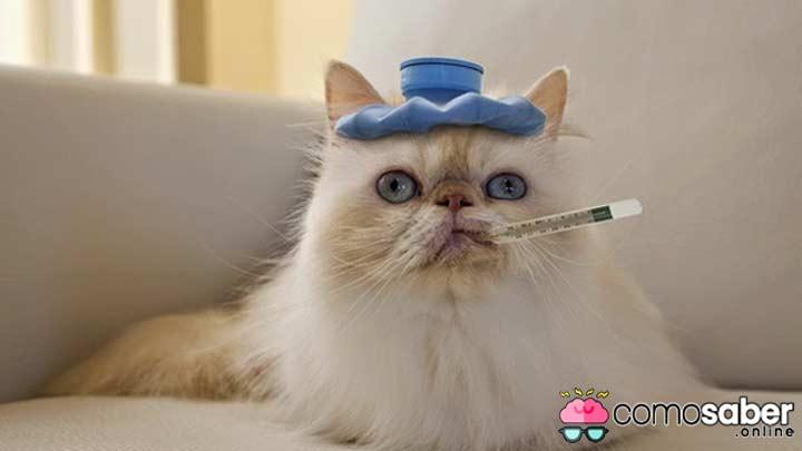 cuales son los sintomas de mi gato cuando tiene fiebre
